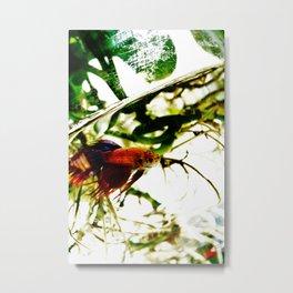 A Fish Named Earl Metal Print