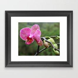 Mama Orchid Framed Art Print