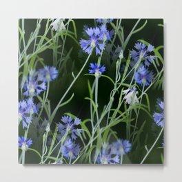 Beautiful Cornflowers on Black Background #decor #society6 #buyart Metal Print