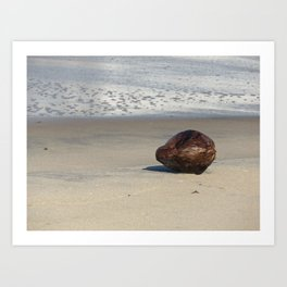 Dry coconut on the beach Art Print