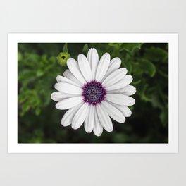 Flower Portriat - Purple Power Art Print