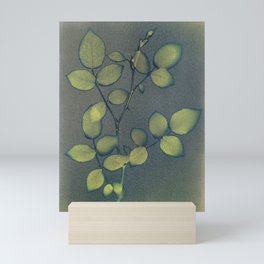 Cyanotype 004 - Rose Bud - Unwashed Mini Art Print