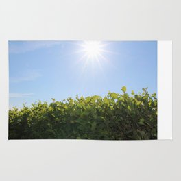 Summer Photos, Nature Photography, fine art gifts, Landscape Photo, sunshine photo Rug