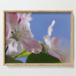 Apple Tree Blossoms InThe Blue Sky Serving Tray