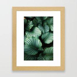 Baby leaves Framed Art Print