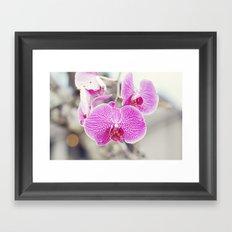 Orchid Hush  Framed Art Print