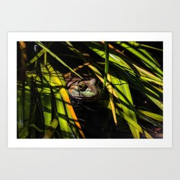 Frog in the reeds Art Print
