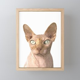 Sphynx cat portrait Framed Mini Art Print