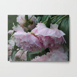 Flower pic 6 Metal Print