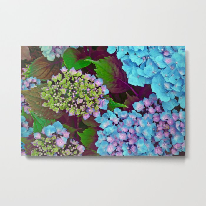 Hydrangea Pink and Blue Metal Print