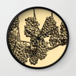 American grape growing and wine making (1885) Wall Clock