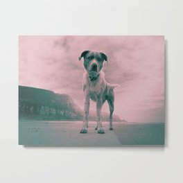 Dog on beach. What's your name? Metal Print