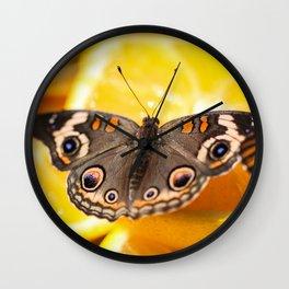 Common Buckeye Junonia Coenia Wall Clock
