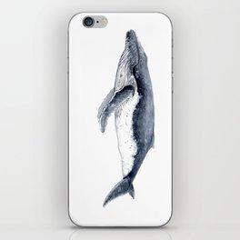 Humpback whale (Megaptera novaeangliae) iPhone Skin
