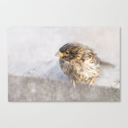Sparrow - Faulty forecast Canvas Print
