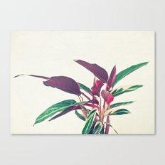 Prayer Plant II Canvas Print