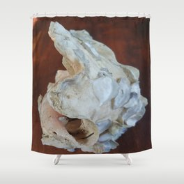 Ancienne conque 2 Shower Curtain