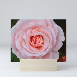 Pink rose beauty Mini Art Print