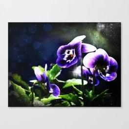 Violet Johnny Jump Ups And Stars Canvas Print