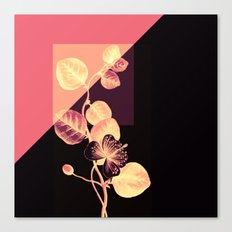 flower on pink,purple and black Canvas Print