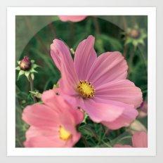 Wild flower in pink Art Print