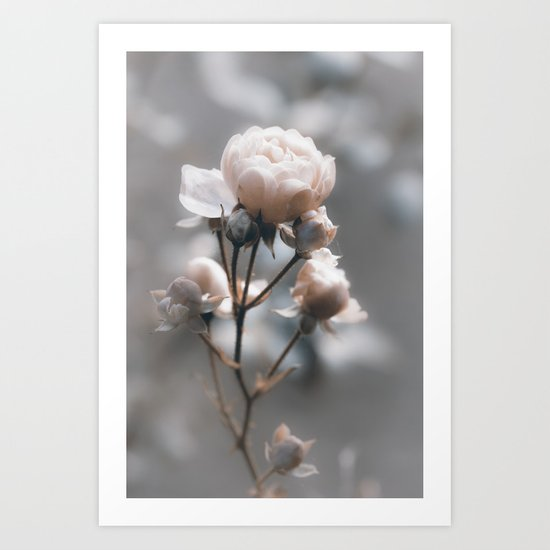 Bokehlicious pink Rose at Backlight - Roses and Flowers Art Print