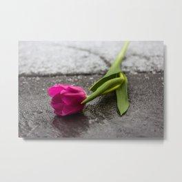 tulip_6 Metal Print