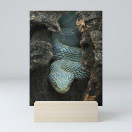 Blue Bush Viper in Hollow Log Mini Art Print