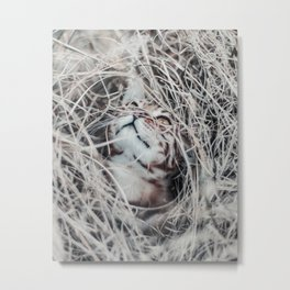 Kitten wool Metal Print