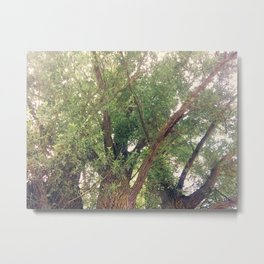 Rushing of the Leaves Photography Metal Print