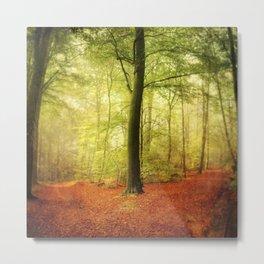 Beech tree forest glow Metal Print
