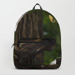 Bald Eagle Portrait Backpack