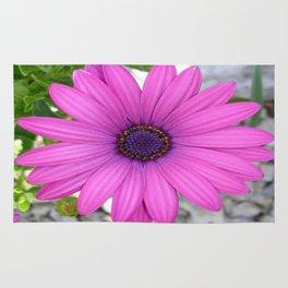 Violet Pink Osteospemum Flower Daisy  Rug