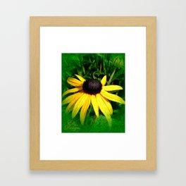 Black Eyed Susan Painted Photo Framed Art Print