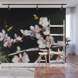White Japanese Apricot Flowers Against The Black Background Wall Mural