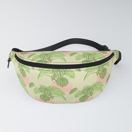 Peperomia Fanny Pack
