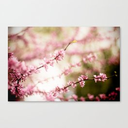 Beautiful Light Canvas Print