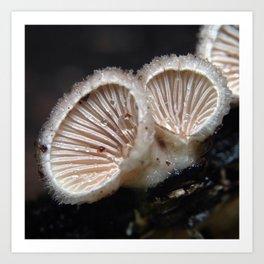 Schizophyllum commune Art Print