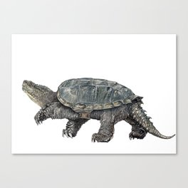 Common snapping turtle Canvas Print