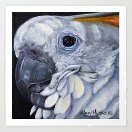 Citron Cockatoo Art Print