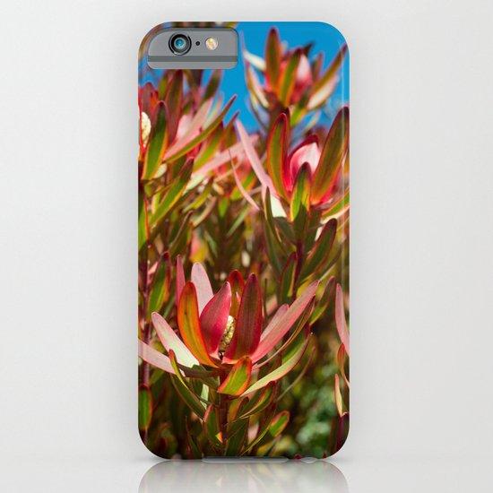 Leucadendron Jester iPhone & iPod Case