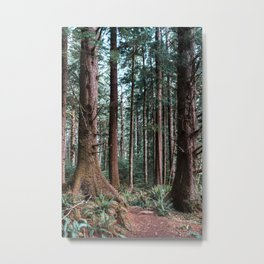 Oregon Coast Forest | Travel Photography | Old Growth Sitka Spruce Metal Print