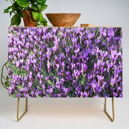 SPANISH LAVENDER AND ONE BEE Credenza