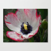 tulip Canvas Prints featuring Tulip by Vitta
