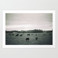 cows Art Prints featuring Cows by Christopher Morley