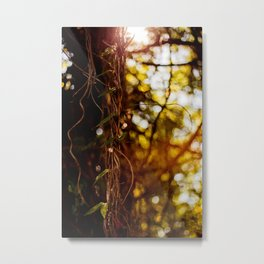 Warmth Metal Print