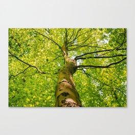 Sunlight Through Green Tree Crown Canvas Print