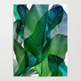 Palm leaf jungle Bali banana palm frond greens Poster