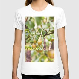 Pear tree ripe fruits cluster T-shirt
