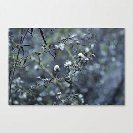 Chasing Winter Canvas Print